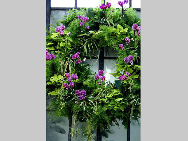 An orchid wreath is a beautiful garden art piece that can be used to adorn the main door of your house. It consists of a balanced combination of orchids, asparagus and ferns.