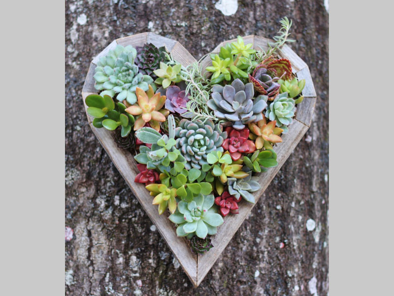 A succulent heart is ideal as a door ornament. It's variety in color and in plant genus add to the interest. It also requires minimal watering and is perfect for a busy family.